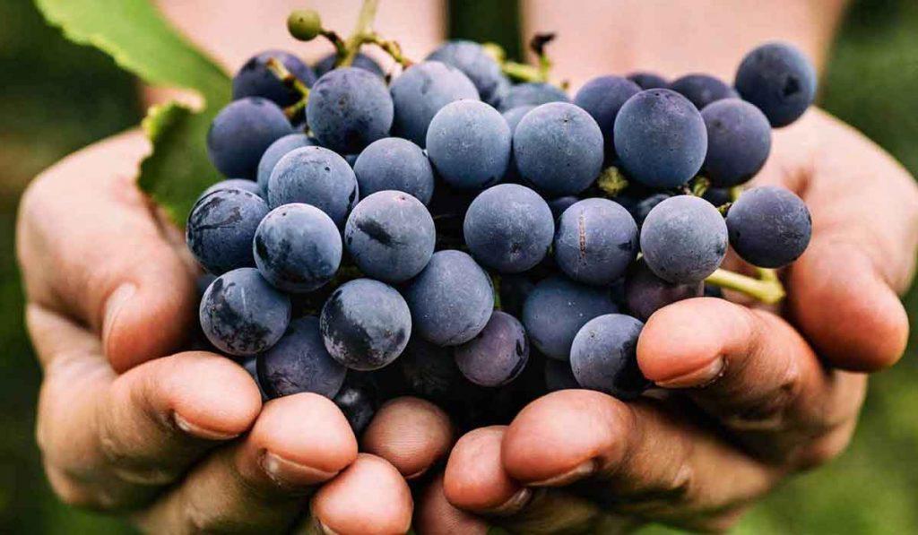 سلبيات العنب للحامل