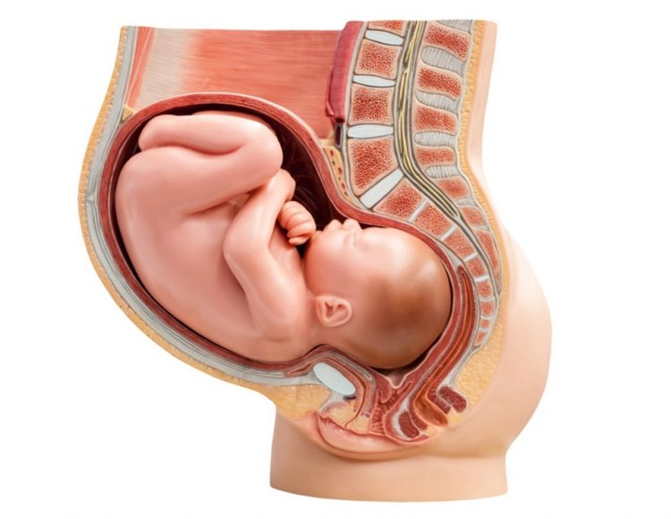 أعراض الحمل في الشهر السابع