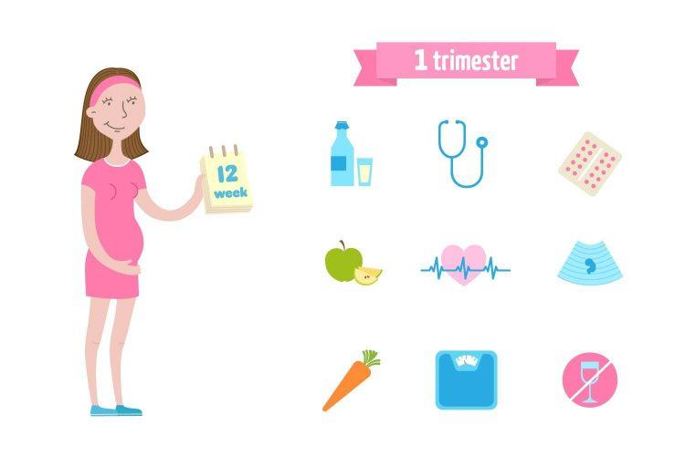 متى تبدا زيادة الوزن في الحمل؟