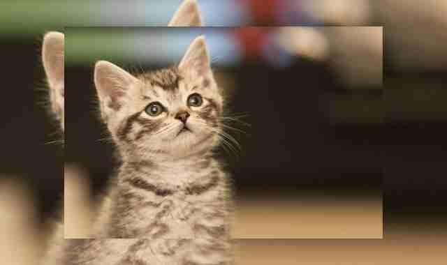 هل القطط تسبب العقم